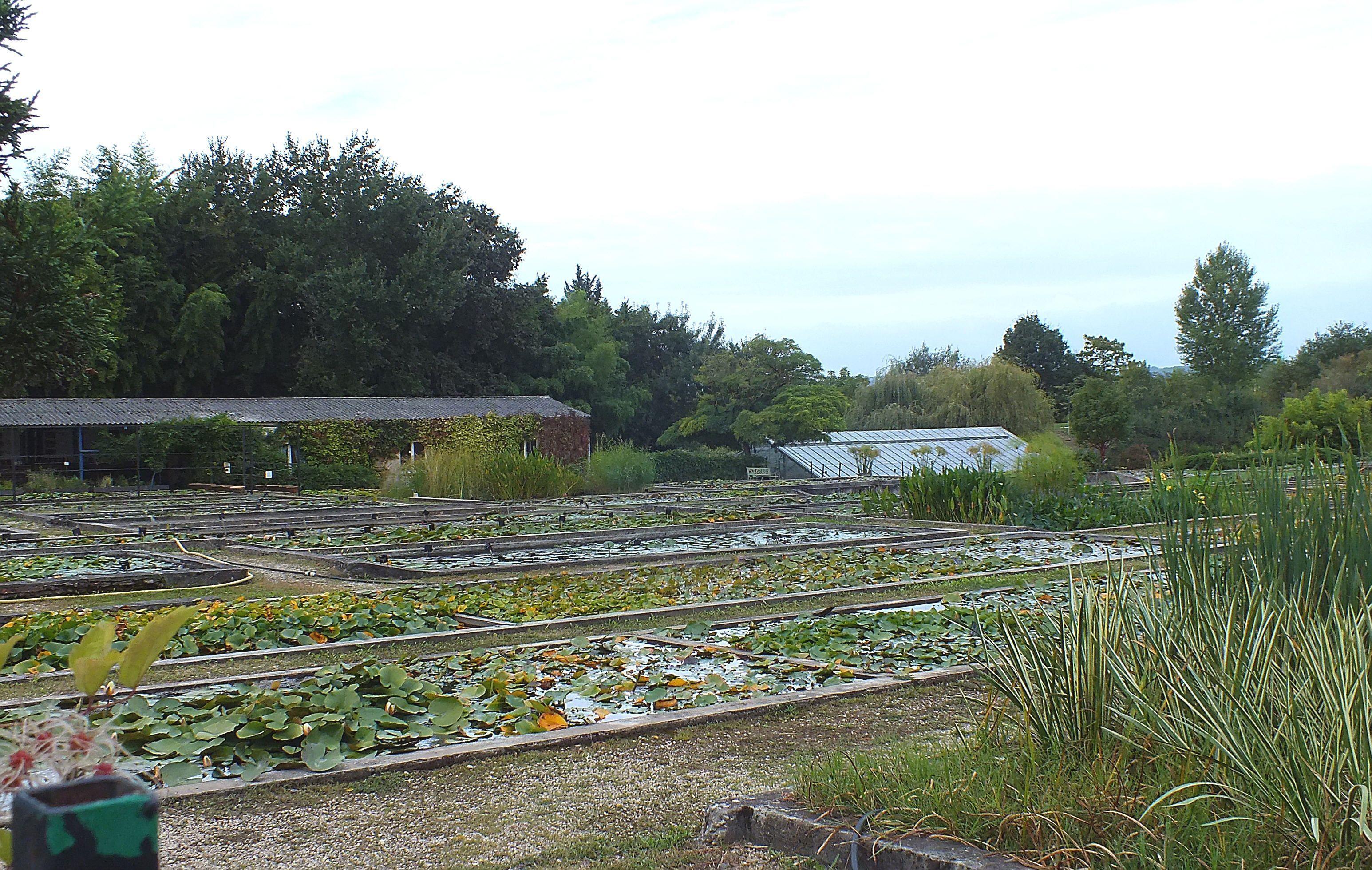 Le temple sur lot vue de la commune - Jardin des nenuphars le temple sur lot ...